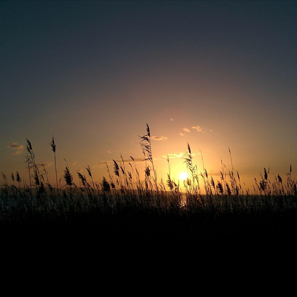Le soleil à travers les hautes herbes